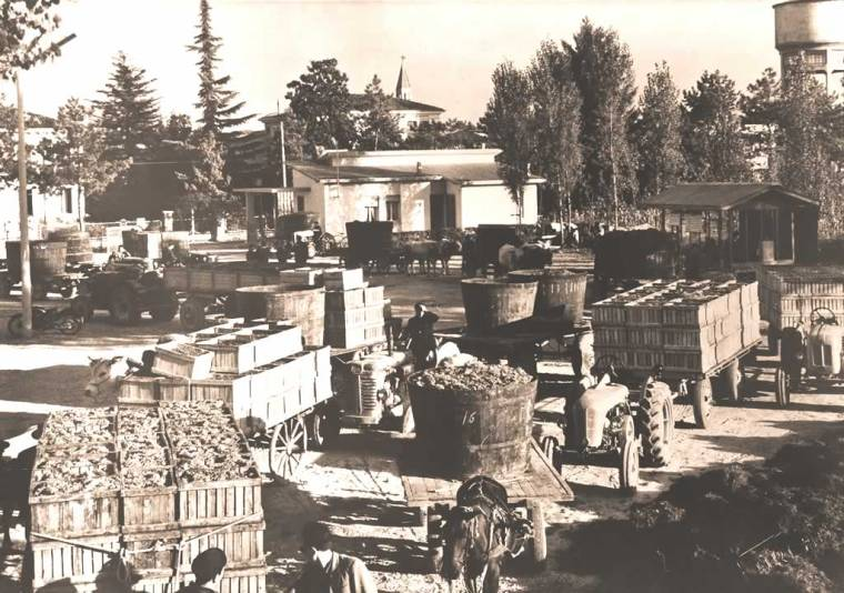 carri-ceste-uva